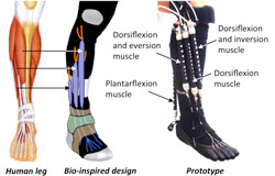 OrthoticDesign