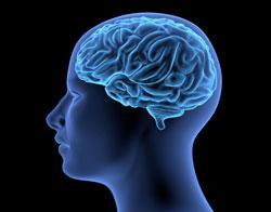 vet-brain