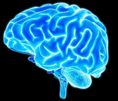 brain-tibi